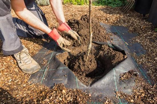 Landscaping Winchester VA