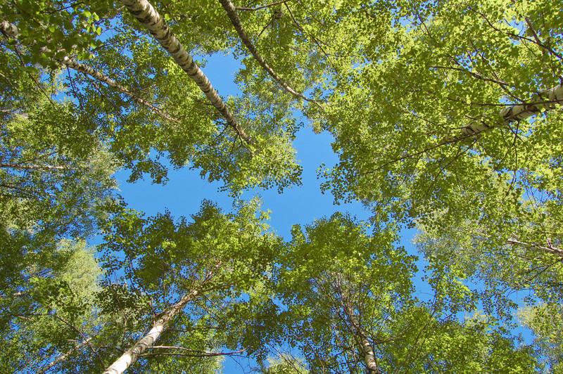 Tree planting landscaping